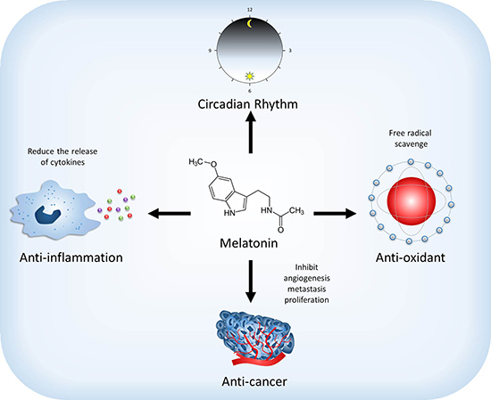 Effect of melatonin on the physiological and pathological functions.