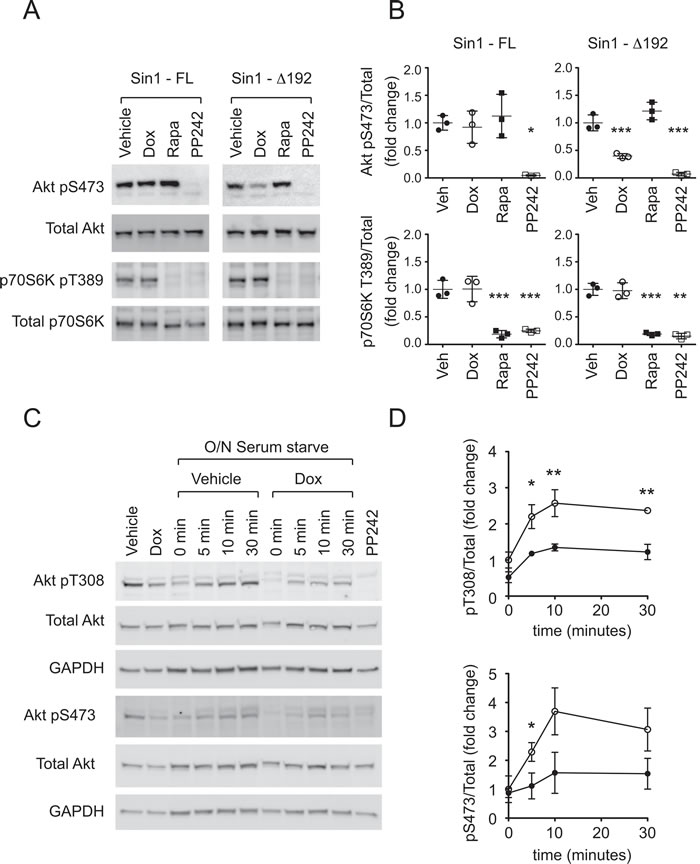 ∆Sin1 expression suppresses Akt activation but not p70S6K activation in DLD1 cells.