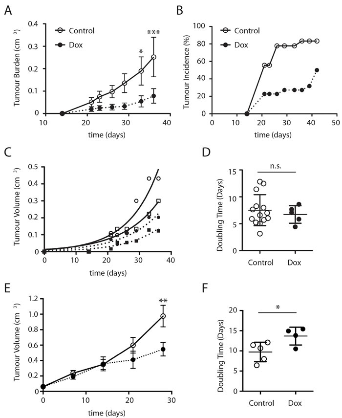 ∆Sin1 expression suppresses DLD1 subcutaneous tumour growth in NOD/SCID mice.