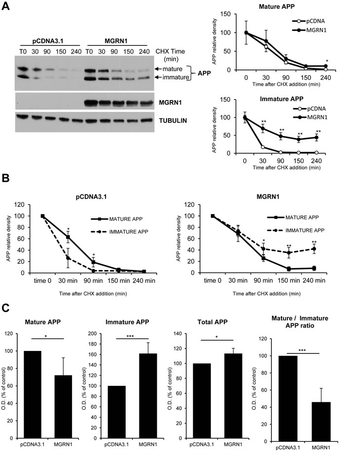 MGRN1 inhibits APP maturation in transfected HEK293 cells.