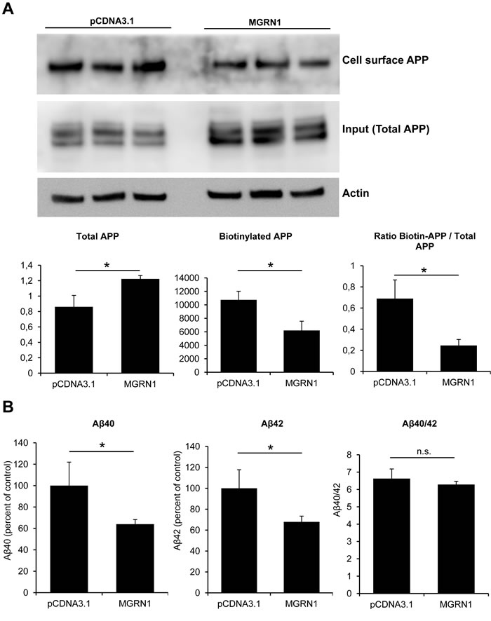 MGRN1 decreases cell-surface APP and Aβ secretion.