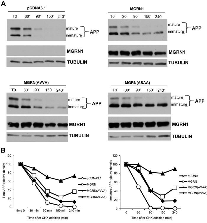 MGRN1 mutational studies.
