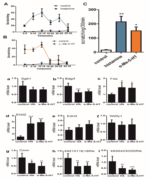 (upper) Pruritogen-evoked scratching behavior in histamine-treated (800μg/50μl), α-Me-5-HT-treated (35μg/50 μl) and saline-treated (control) mice (n = 6/group).