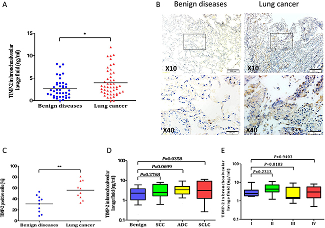 TIMP-2 in lung cancer patients and benign diseases.