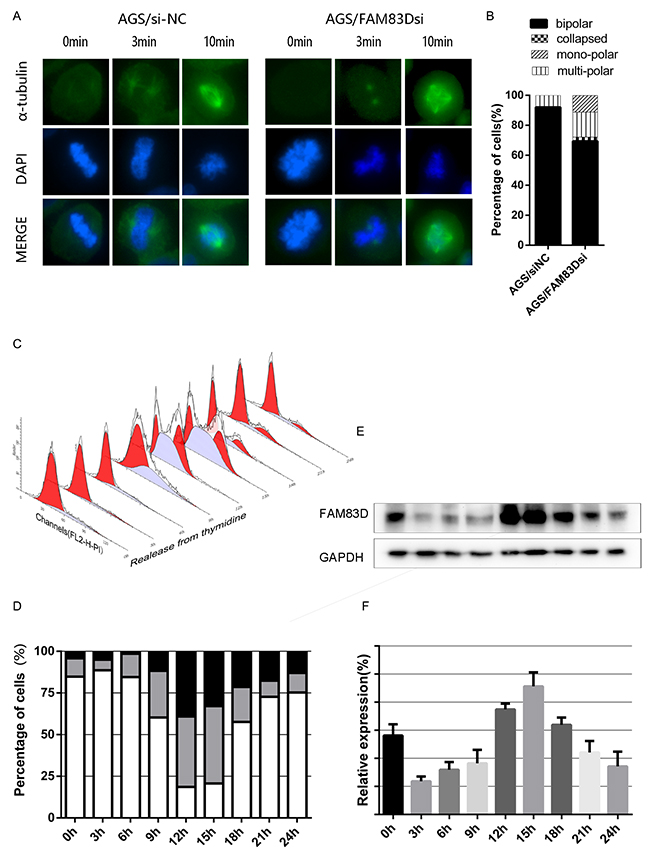 Cold-sensitive microtubules regrowth assay and cell cycle dependent FAM83D expression.