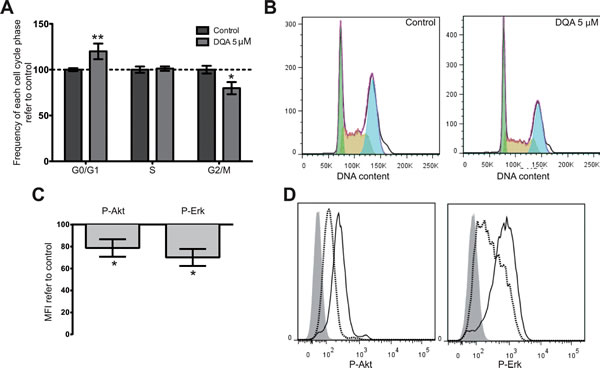 DQA treatment induces cell cycle arrest and downregulation of P-Akt, P-Erk and P-Stat3.