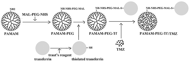 Preparation of Tf targeting nanoparticle.