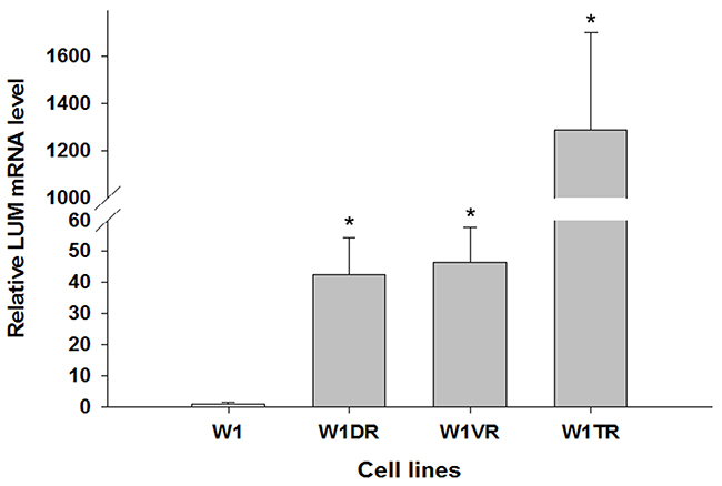 Expression analysis (Q-PCR) of the LUM gene.