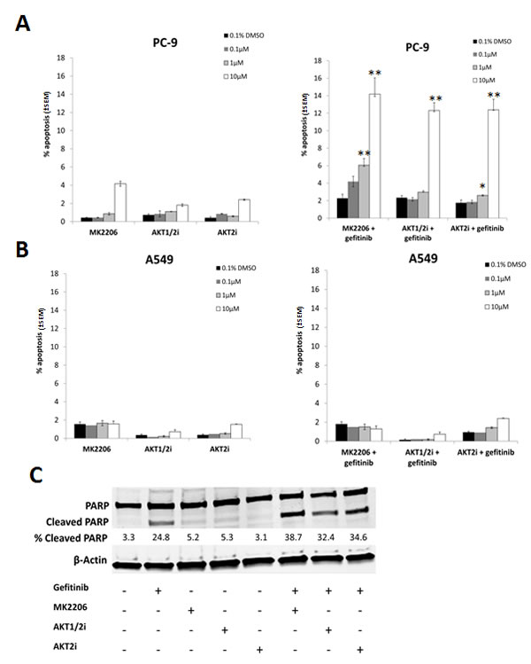 The effect of selective AKT inhibitors on the gefitinib induced apoptosis in NSCLC cells.