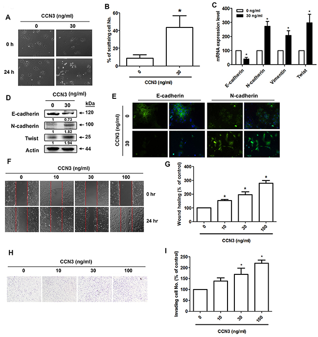CCN3 directly induces EMT in PCa cells.