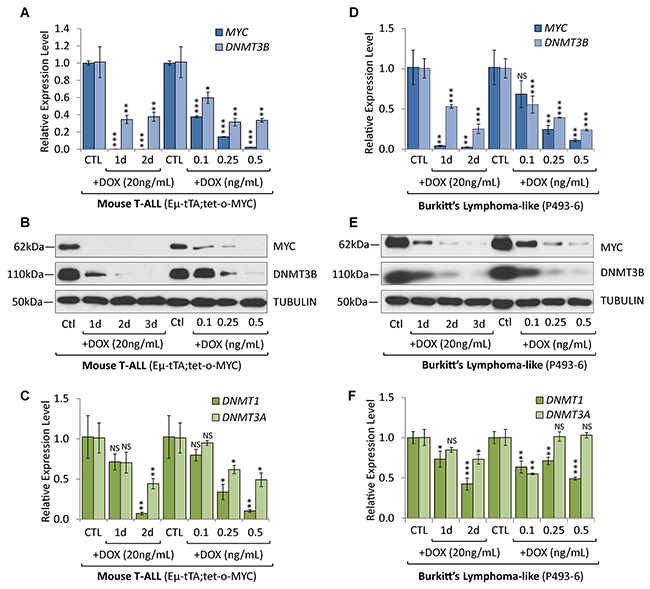 Overexpression of DNMT3B in T-ALL and Burkitt's lymphoma is MYC-dependent.