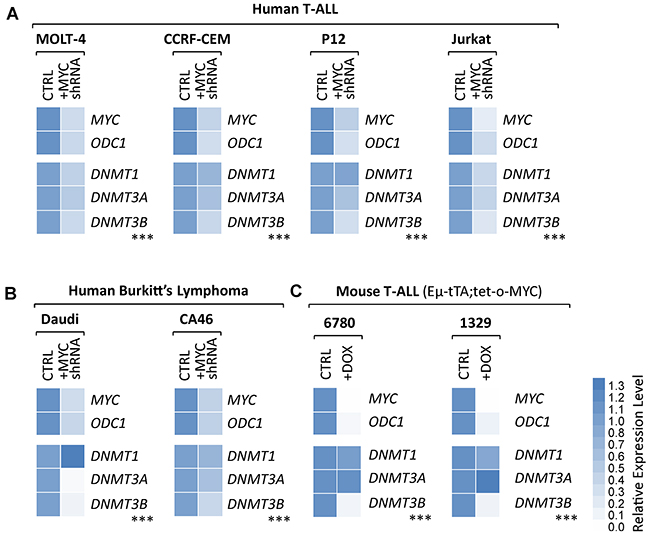 Knock-down of endogenous MYC leads to diminished DNMT3B expression levels in human T-ALL and Burkitt's lymphoma cell lines.