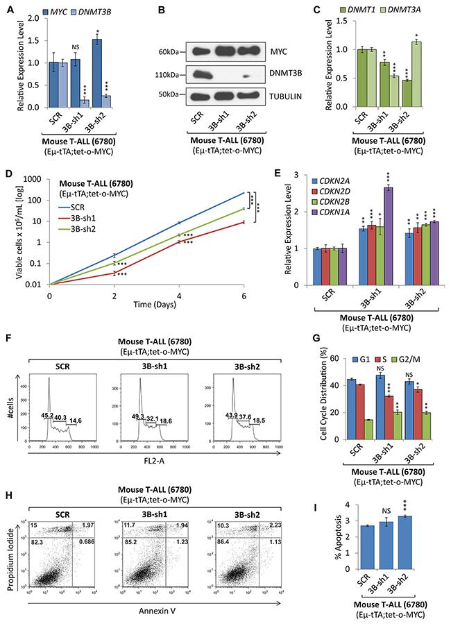 shRNA-mediated knock-down of DNMT3B decreased tumor cell proliferation.