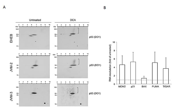 Activation of p53 pathway by DCA in p53