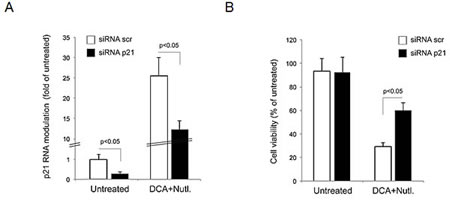 Role of p21 pathway in mediating the anti-leukemic activity of DCA+Nutlin-3.