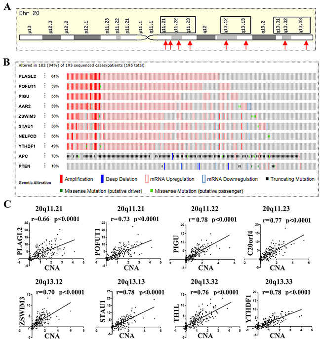 8 genes located on chromosome 20q and frequently unregulated in colorectal cancer showed significant CNA–mRNA correlation.