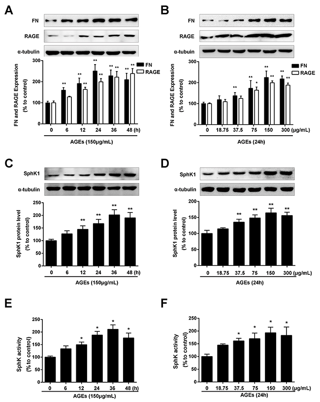 AGEs increased FN and SphK1 protein expression and SphK1 activity in a time- and dose-dependent manner in GMCs.