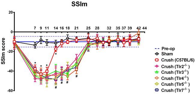 The sciatic static index in mice (SSIm) in the CatWalk gait analysis of sham-operated and experimental mice after sciatic nerve crush injury (n = 10) were recorded thrice a week for 1−7 weeks.