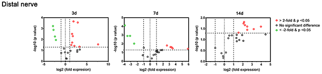 Plot of the differentially-expressed genes in a distal nerve segment of C57BL/6 mice in the PCR array at post-crush days 3, 7, and 14.