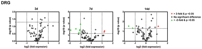 Plot of the differentially-expressed genes in L4-L6 dorsal root ganglia of C57BL/6 mice in the PCR array at post-crush day 3, 7, and 14.