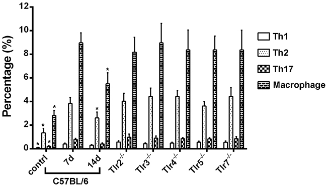 The percentages of CD4+IL4+ Th1, CD4+IFNγ+ Th2, CD4+IL17A+ Th17 cells, and CD11b+F4/80+ macrophages in the distal sciatic nerve segment of C57BL/6 mice in sham control and at post-crush days 7 and 14 as well as of Tlr-knockout mice at post-crush day 7.
