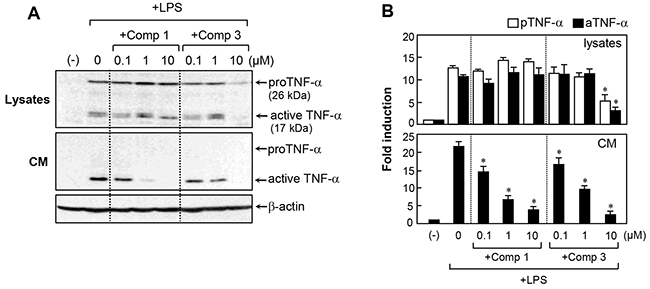 Effects of comp 1 and 3 on TNF-α expression and secretion in LPS-treated BV2 cells.