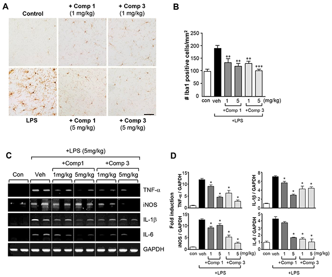 Comp 1 and 3 suppress microglial activation and the expression of pro-inflammatory molecules in LPS-induced sytemic inflammation.