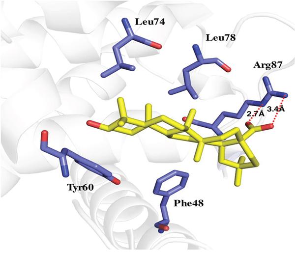 Molecular docking of MA binding to Beclin1 BH3 domain.