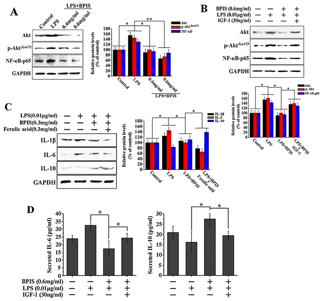 BPIS suppressed LPS-induced NF-κB expression by reduced phosphorylation of Akt in HT-29 cells.