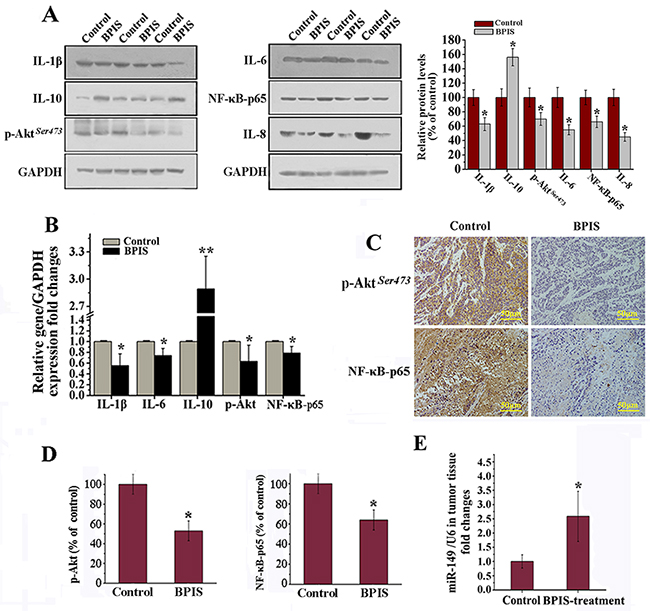 BPIS attenuated inflammatory responses in colon cell xenograft tumor models.