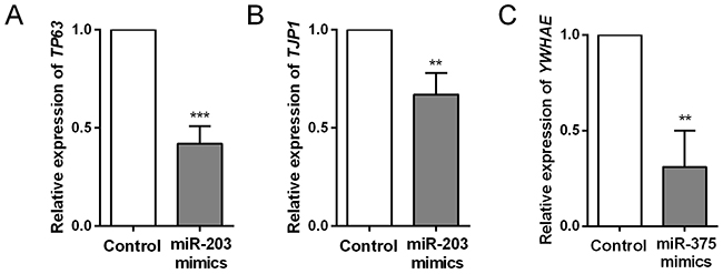 Comparison of target gene expression levels between control and miRNA mimics -transfected HCC cells.