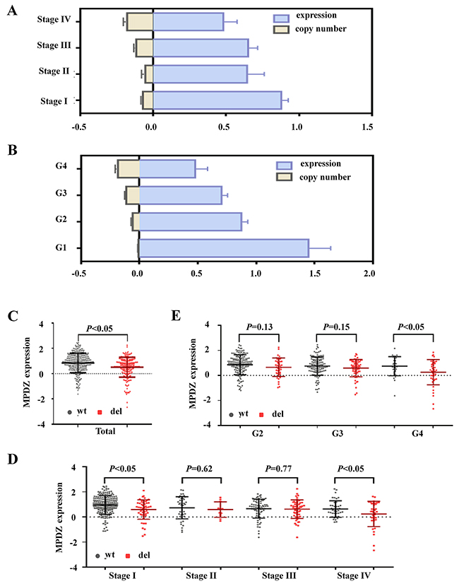 The MPDZ copy number was correlated with mRNA expression level in ccRCC from the TCGA Cohort.
