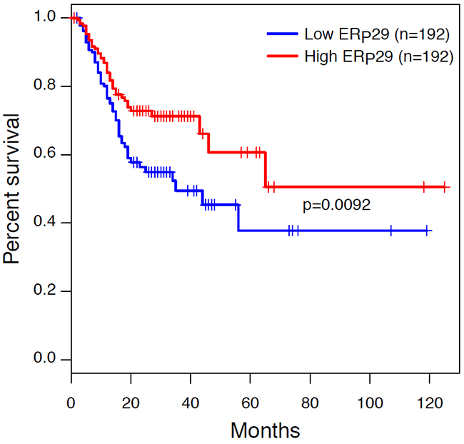 Kaplan-Meier survival curves in gastric carcinoma from The Cancer Genome Atlas (TCGA) dataset.