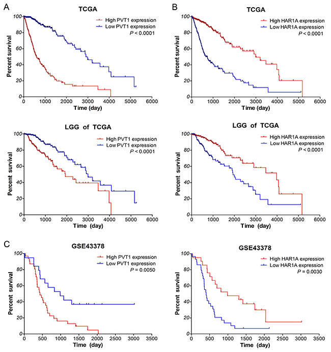 Up-regulated PVT1 and down-regulated HAR1A correlate with poor overall survival of glioma patients.