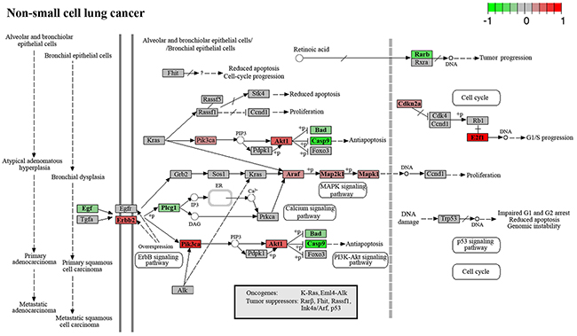Genes involved in the progression of non-small cell lung cancer.