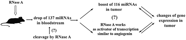 Proposed mechanism of antitumor activity of RNase A.
