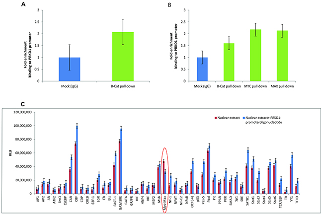 Presence of the beta-catenin and MYC/MAX binding site at the PrKD1 gene promoter.