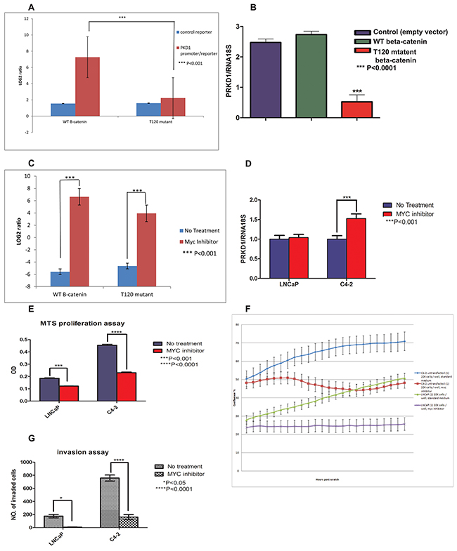 The unphosphorylated threonine 120 (T120) mutant beta-catenin represses PrKD1 gene expression.