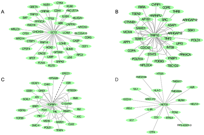 Protein-protein network predicting highly potential interactions with candidate genes based on BioGrid and SRTING databases.