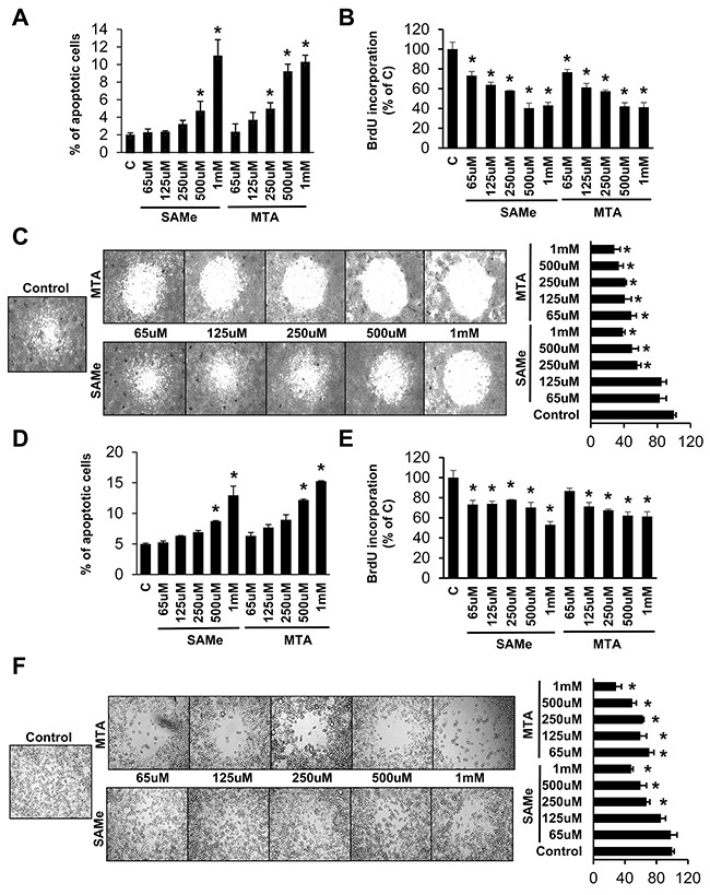 Effects of SAMe and MTA on apoptosis, growth and migration in RKO and SW620 cells.