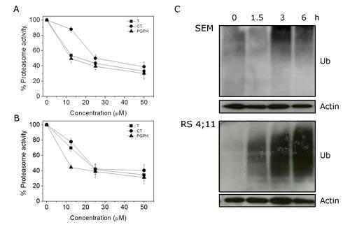 FIGURE 3: CP treatment affects Ubiquitin Proteasome System (UPS).