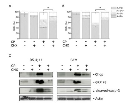 FIGURE 5: CP induces ER stress mediated apoptosis.