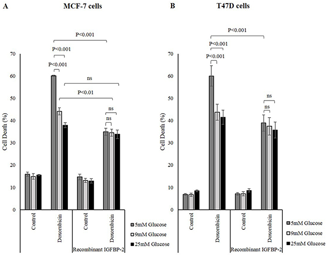 Human recombinant IGFBP-2 promotes survival against chemotherapy in breast cancer cells.