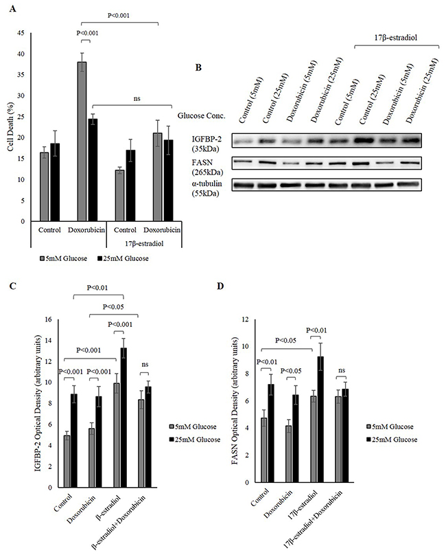 Nuclear ERs increase IGFBP-2 levels that is protective against chemotherapy.