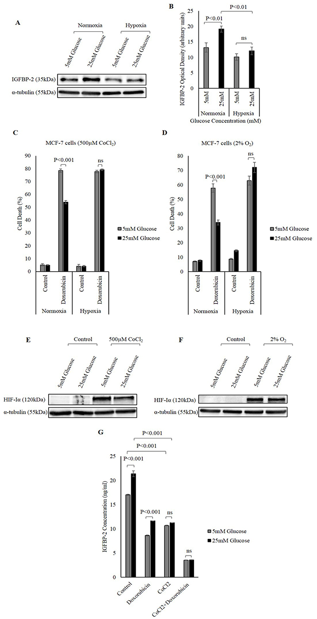 The effect of hypoxia on hyperglycaemia-induced chemo-resistance.