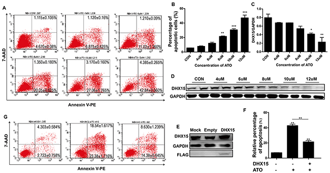 Overexpression of DHX15 inhibited cell apoptosis.