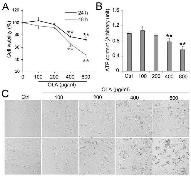 OLA decreased Sertoli cell viability.