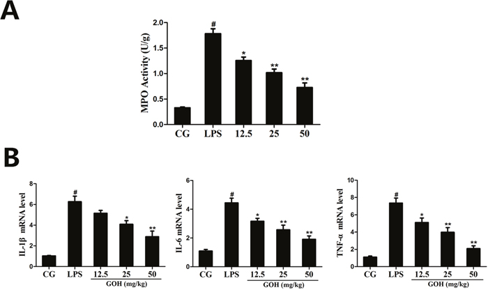 Effects of GOH on MPO activity and cytokine production in lung tissues.