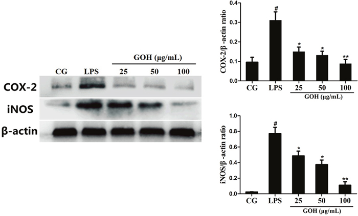 Effects of GOH on the levels of iNOS and COX-2 proteins in LPS-stimulated RAW 264.7 cells.