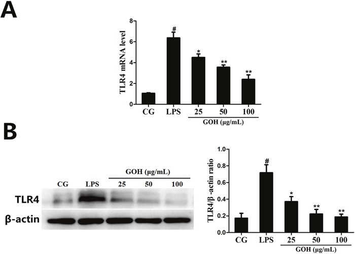 The effects of GOH on the expression of TLR4 in LPS-stimulated RAW 264.7 cells.